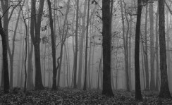 Fog in the woods in November.