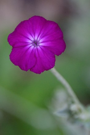Once we stop to see a flower, the richness of color and soft texture seem of other worlds.