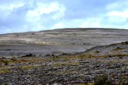 The Burren, in County Clare, is a region of limestone formations that prevent most ordinary commercial uses. Much of it is in a National Park. The entire Burren is noted for wildflowers and green grass juxtaposed against grey. In some places, the grass seems to dominate, but here, the grey rock asserts itself.