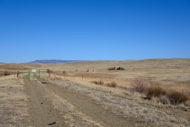 Rancher dropping off cattle in northeastern New Mexico.