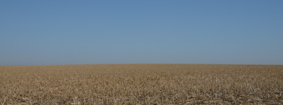 A cornfield in western Kansas, early March.