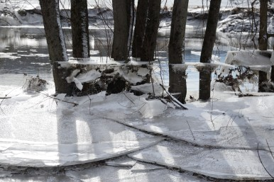 Ice platforms on trees and plates of ice that collapsed when the water receded