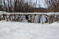 An ice sheet suspended by small trees and weeds, about two feet above the remaining ice. After the flood, Saturday Feb. 27