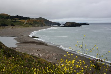 Near Point Reyes, the flowers introduce a quiet beach.