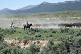 Traditional ways of earning a living still exist, such as this cattle drive in eastern Nevada, but they are no longer dominant.