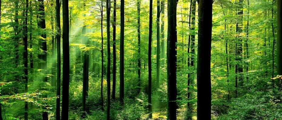 Les forets Foret.jpg?zoom=1