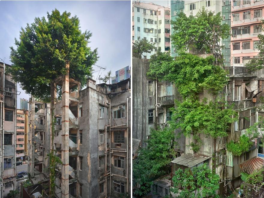 nature-reprend-ses-droits