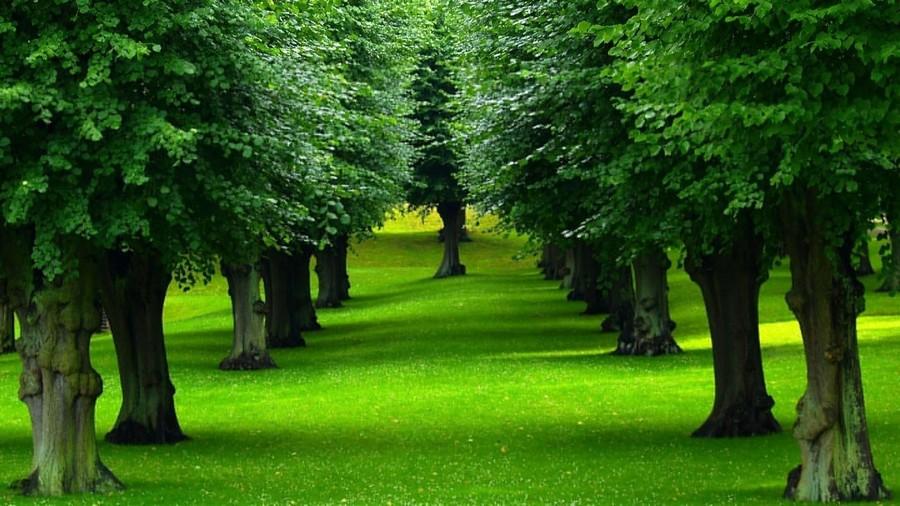arbres-4
