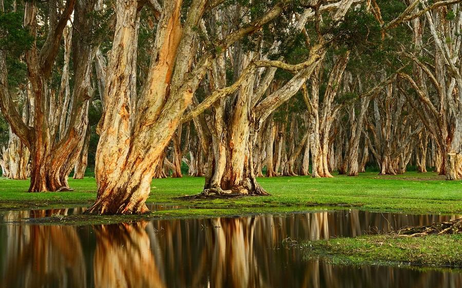 arbres-6