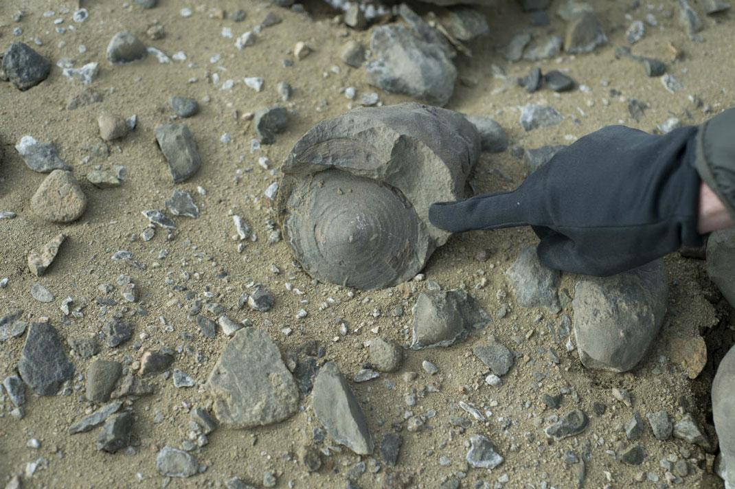fossiles-antarctique-6