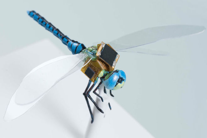 genetically-modified-cyborg-dragonflies