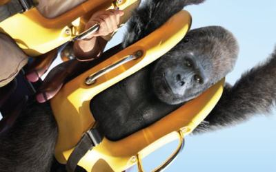 Zookeeper Trailers