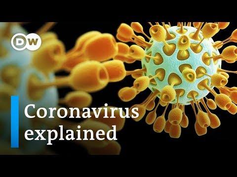 Coronavirus defined: The place it got here from and the right way to cease it | DW Information
