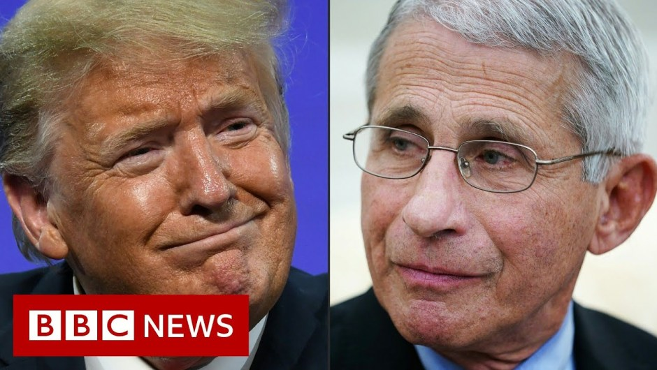 Coronavirus: White Home targets US illness chief Dr Anthony Fauci – BBC Information