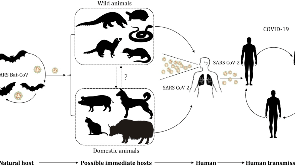 Is COVID-19 be transmitted between people and animals?