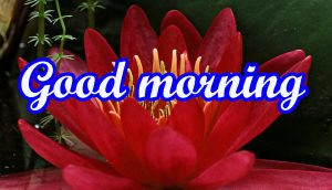 very nice good morning