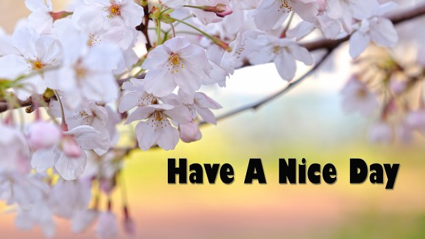 Have Nice Day Quotes Archidev