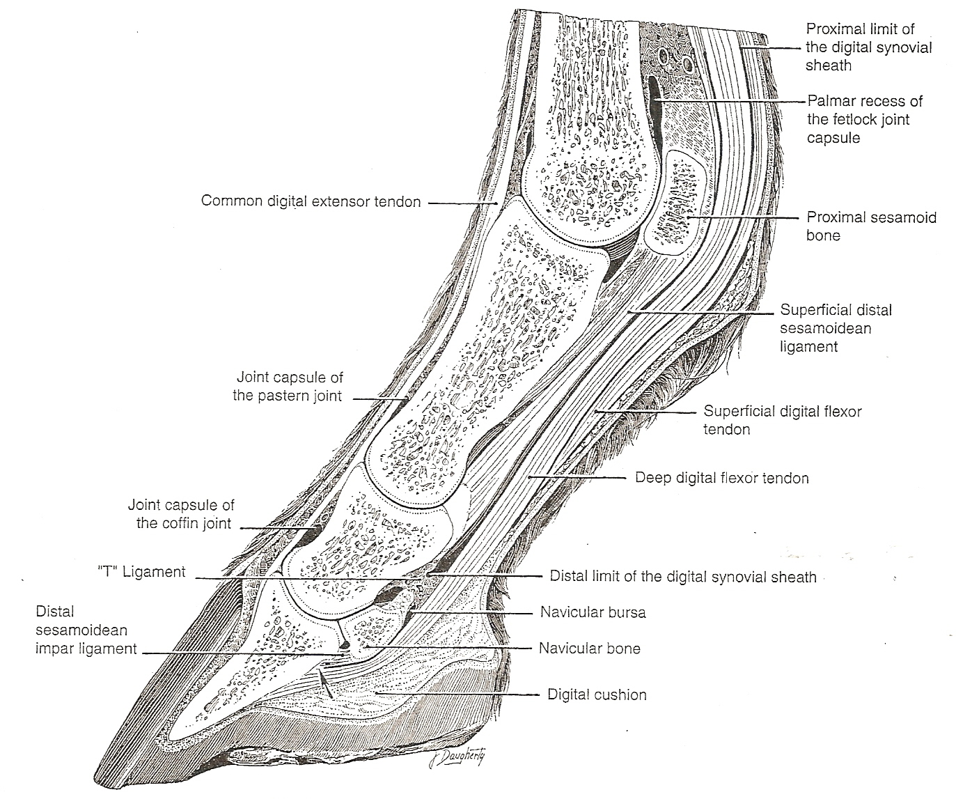 hight resolution of diagram of foot pain area