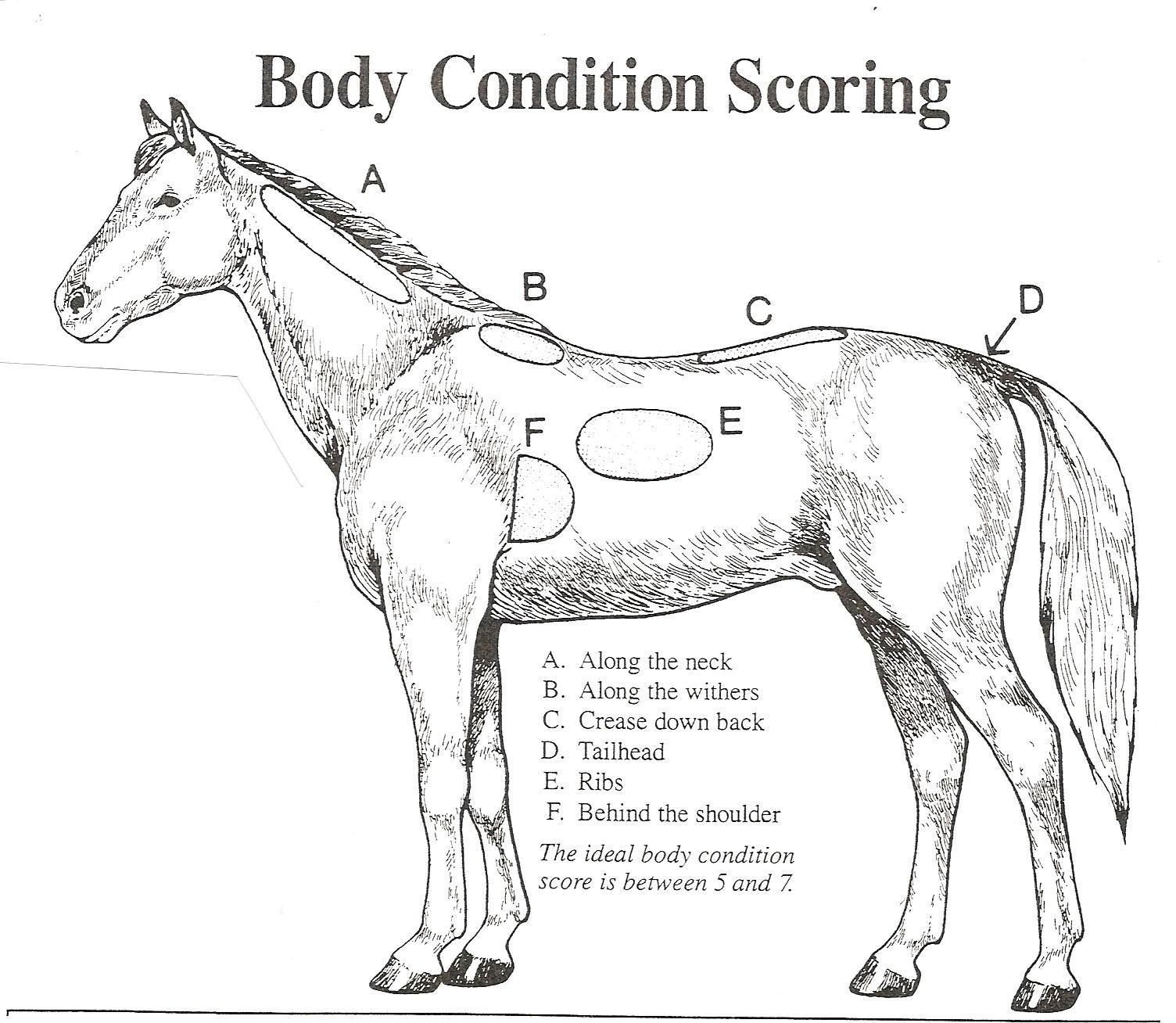 horse neck diagram john deere stx38 lawn tractor wiring mill creek veterinary service fort collins co