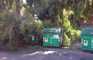 alberi-caduti-latina-498dty5w3