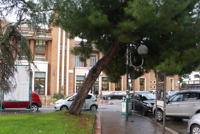 albero-poste-latina-49892341