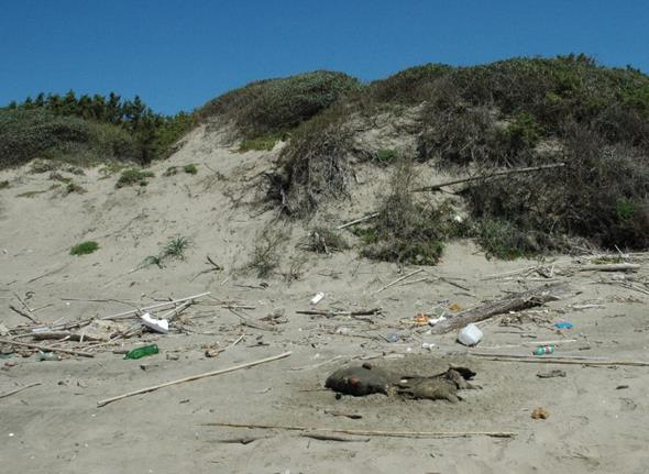 sabaudia-spiaggia-sporcizia-latina24ore-5798222