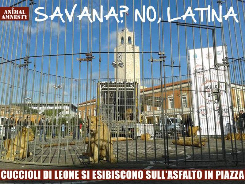 leoni-piazza-latina
