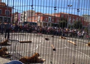 leoni-piazza-popolo-latina-02