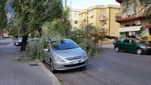 albero-caduto-via-dei-volsci-latina