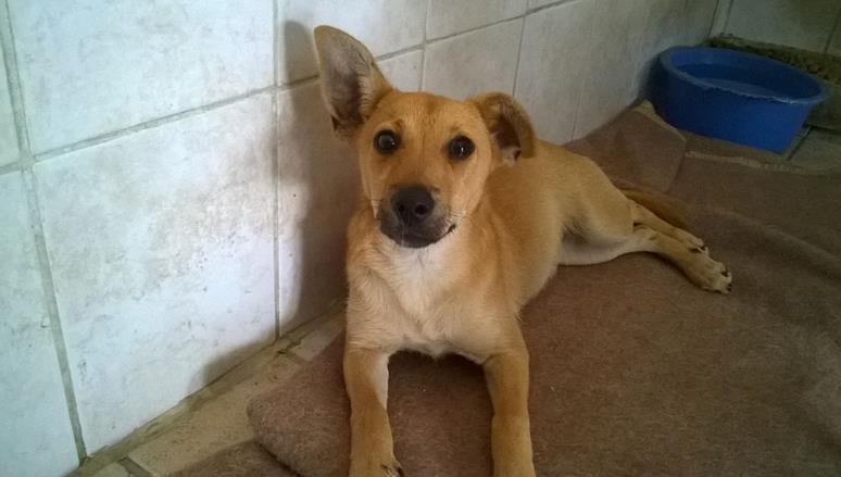 cane-cucciolo-adozione-latina