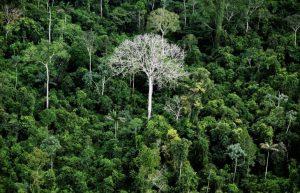Foresta-Amazzonica-amazzonia-alberi