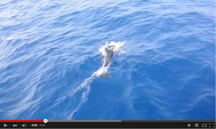 video-delfini-ponza-ventotene
