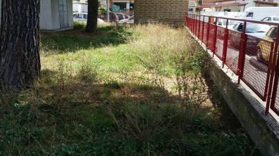 latina-scuola-via-aurunci-erba-2
