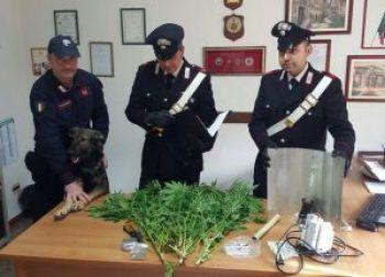 marijuana-carabinieri-cisterna