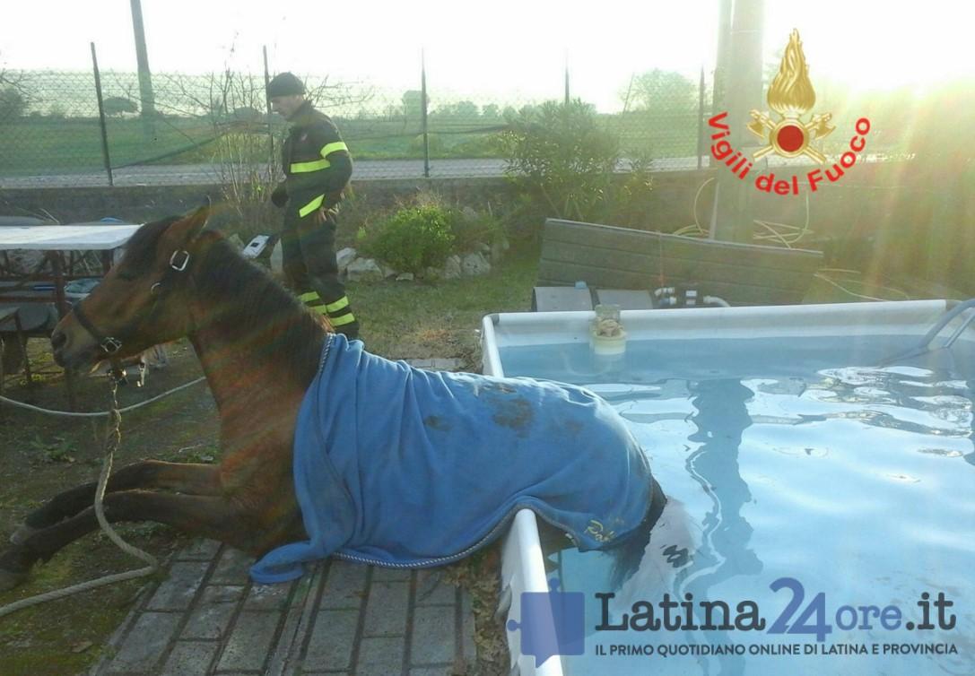 cavallo-piscina-aprilia