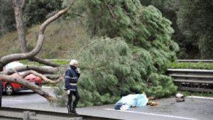 Un pino crollato a Roma ha provocato un incidente mortale
