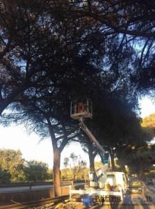 taglio-alberi-pontina-2016-3