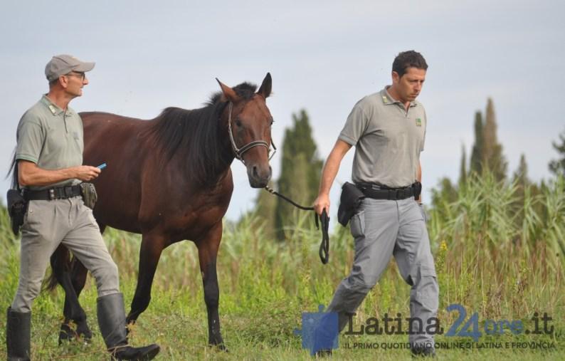 sgombero-terreni-cavalli-disilvio-latina-13