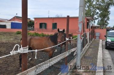 sgombero-terreni-cavalli-disilvio-latina-21