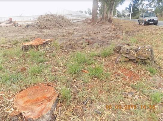 alberi-tagliati-frangivento2