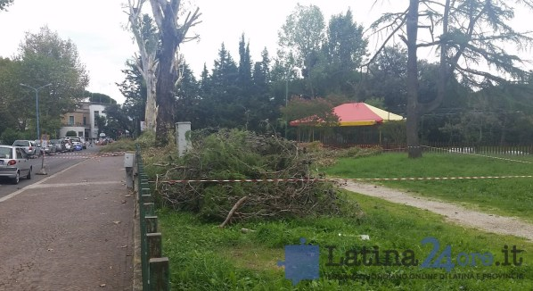 alberi-tagliati-potati-latina-parco-comunale-2016-4