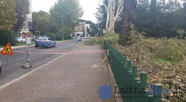 alberi-tagliati-potati-latina-parco-comunale-2016-7