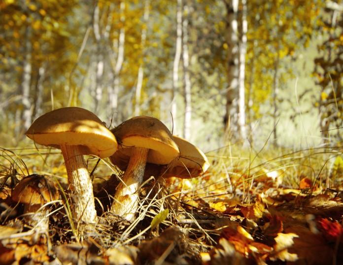 fungo-funghi-generica-bosco