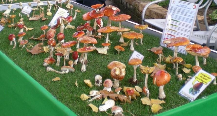 mostra-funghi-latina-2016