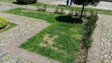 degrado-piazza-popolo-piante-latina-4