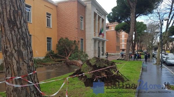 albero-caduto-viale-mazzini-vittorio-veneto-4