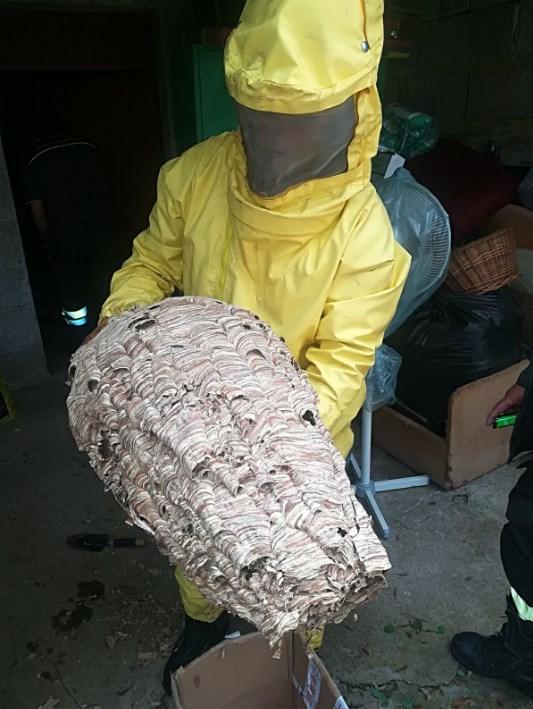 nido-calabroni