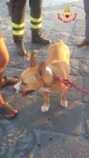 cane salvato a Ponza