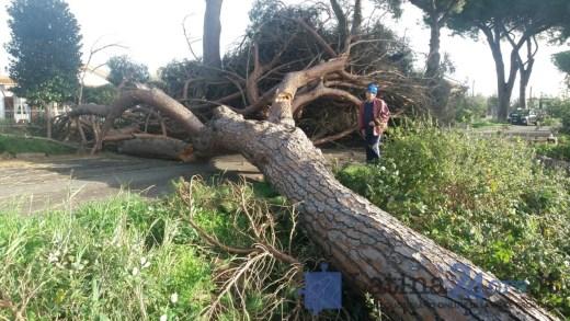 maltempo-latina-vento-danni-2