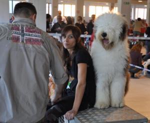 concorso-bellezza-cani-latina-7